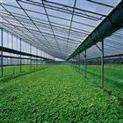 温室采光瓦价格、、湖南采光板多少钱一米