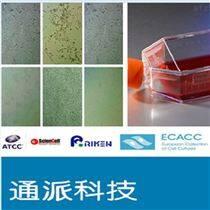 H9C2细胞 H9C2细胞株