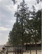 雷達專用避雷針玻璃鋼套管 -河南揚博科技
