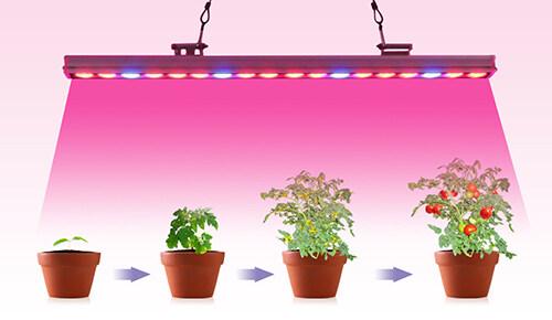 植物灯条应用于植物工厂花卉果蔬种植